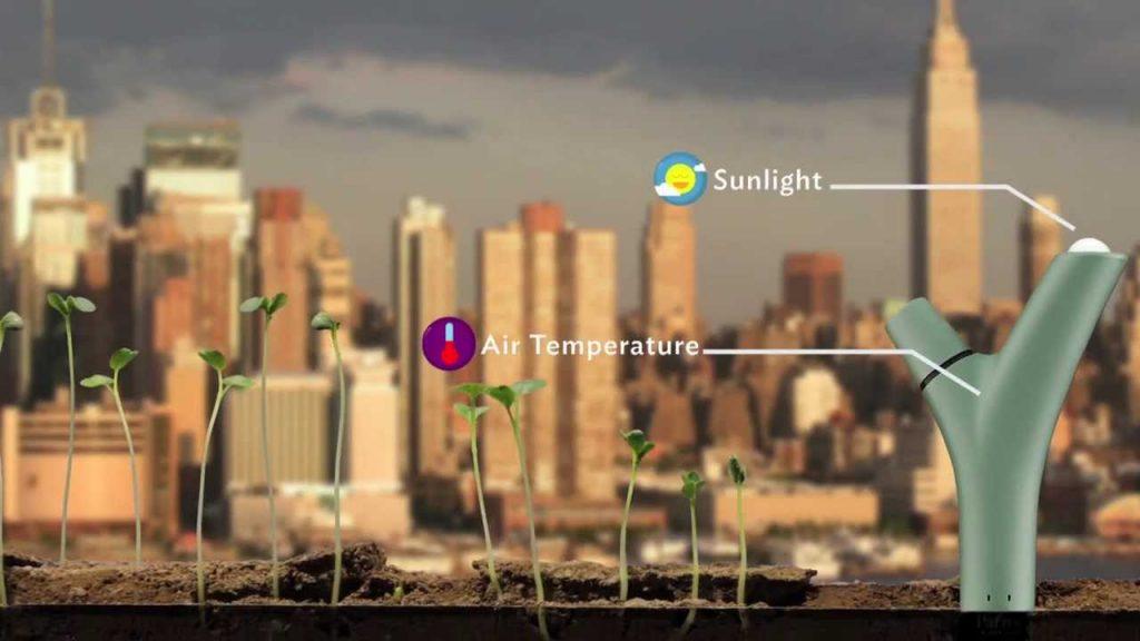 Parrot Flower ที่ใช้ตรวจวัดค่าสารอาหาร ปริมาณน้ำ และแสงแดด